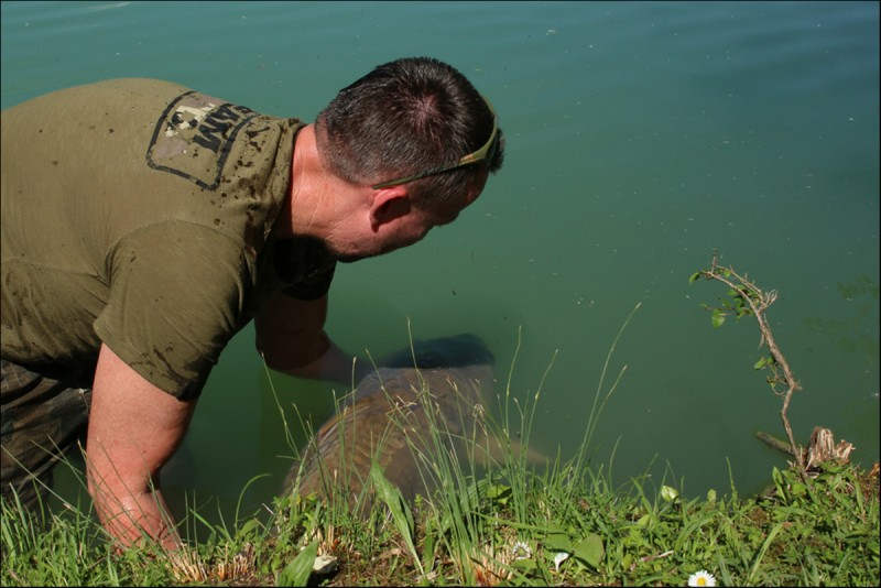returning a carp to villereal lake in France