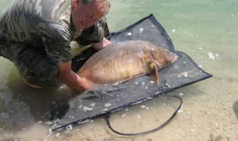 carp care out of the water