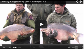 SAPPHIRE GETS MORE CARP STOCK