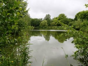 how to look after a carp lake