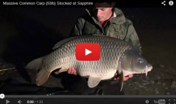 53lb common stocked at sapphire french carp lake