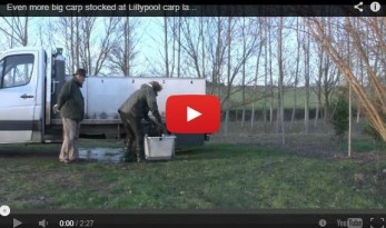 lillypool french carp fishing stock