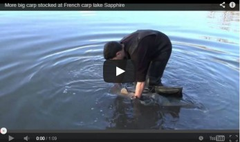 sapphire french carp lake stocking