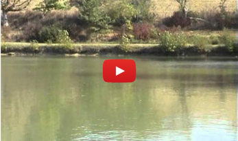 OCTOBER CARP SESSION AT MAS BAS VIDEO