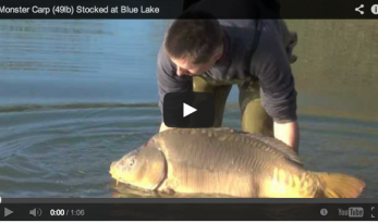 VIDEO OF 49LB MIRROR CARP STOCKED AT BLUE LAKE