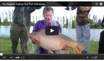 THE RIDGEHILL ANGLING CLUB FISH MALVOISINE