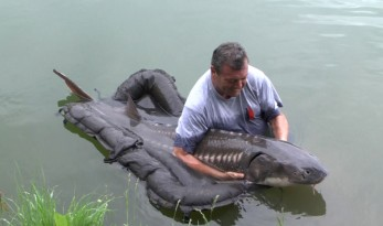Giant Sturgeon from Vaumigny in France