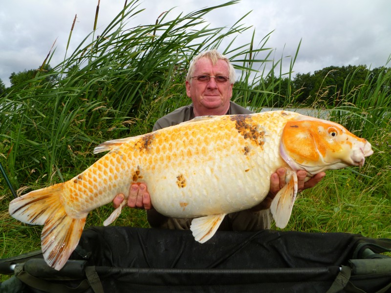 A Round Up Of Koi Carp At Our French Fishing Venues