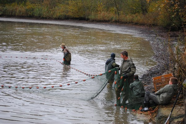 brocard netting a carp lake