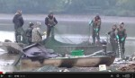 carp fishing in france news webcast