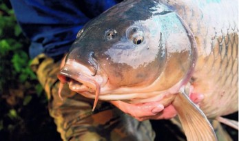 what hook to use carp fishing