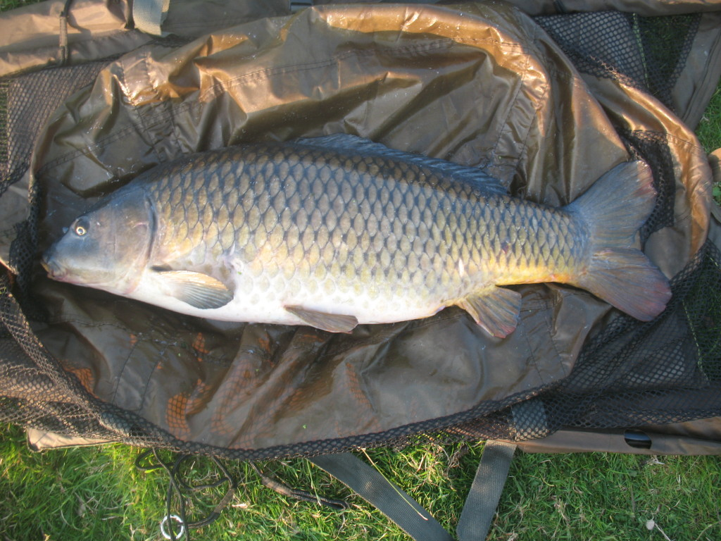 Fishing for carp on the Estate Lake in England