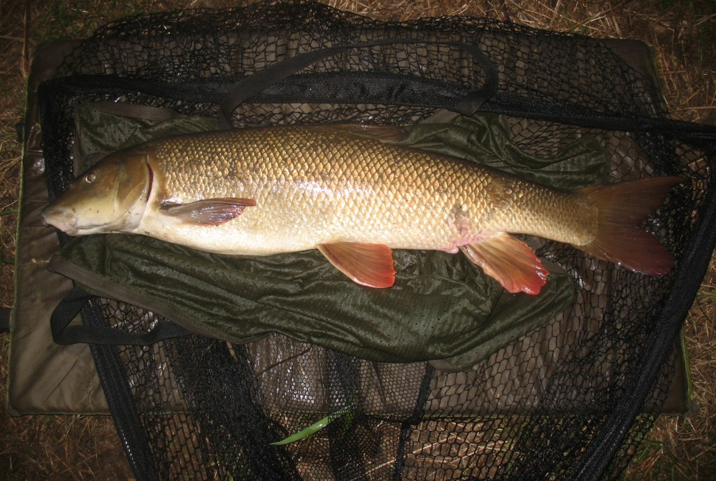 Barbel fishing on the river in England