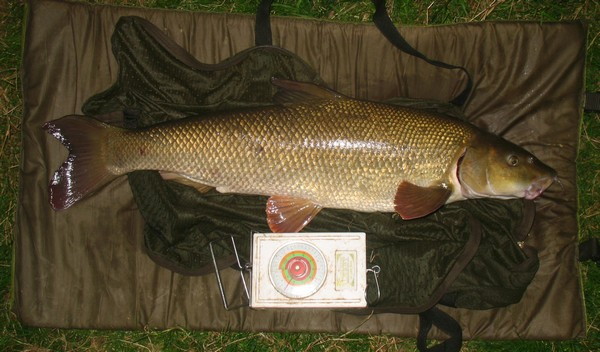 barbel fishing in the uk
