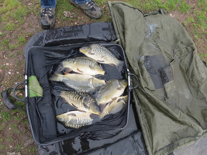 September 2013 with my 2lb stockies which are now upper singles