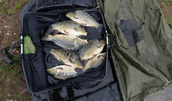 how to manage a carp lake