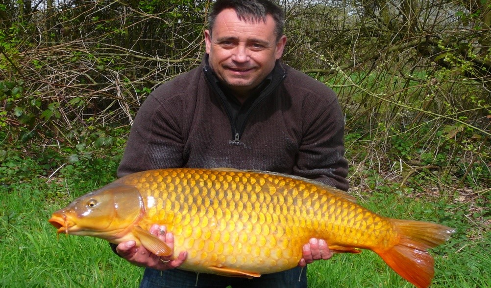 common carp at laroussi