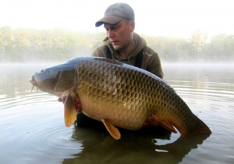 big common carp at Brie lake in france